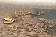 Mass extinction leaves bones and dry wasteland