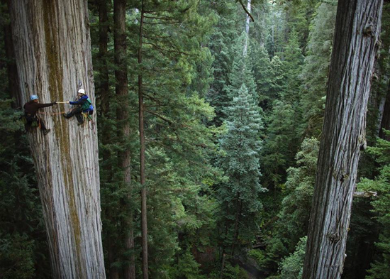 Located in California, The President, a Giant Sequoias tree,  is the second most massive tree known on Earth