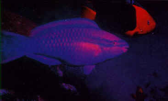 Fish see red, orange, and yellow but not green or blue